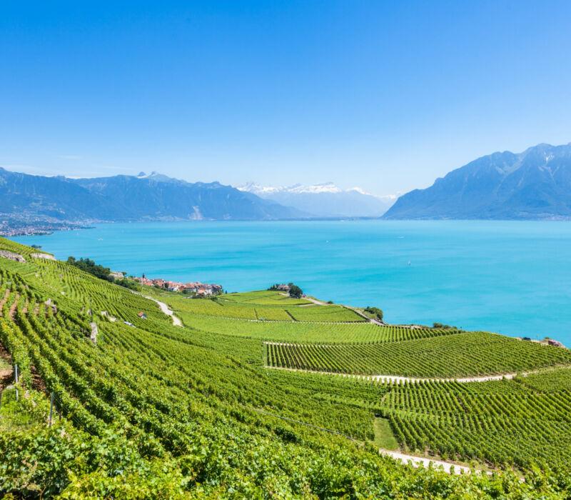 247_Concierge_Montreux_Lavaux_vineyards